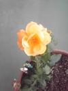 20090518_2