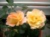 20060516_2